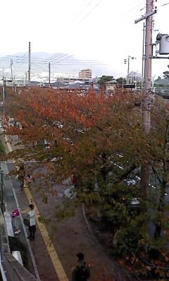 sakura autumn