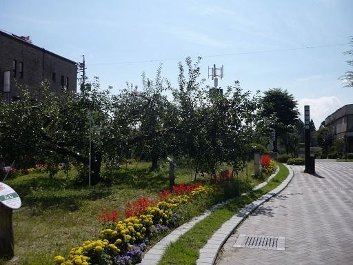 りんご通り1