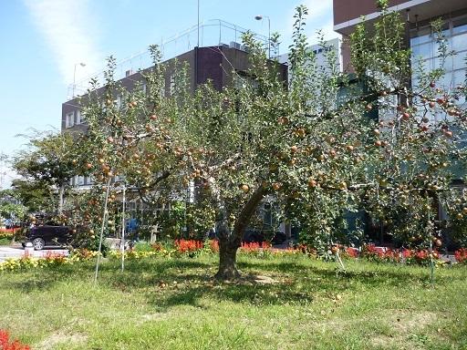 りんご通り2
