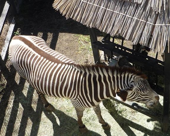京都動物8