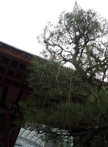 金沢駅雪つり1