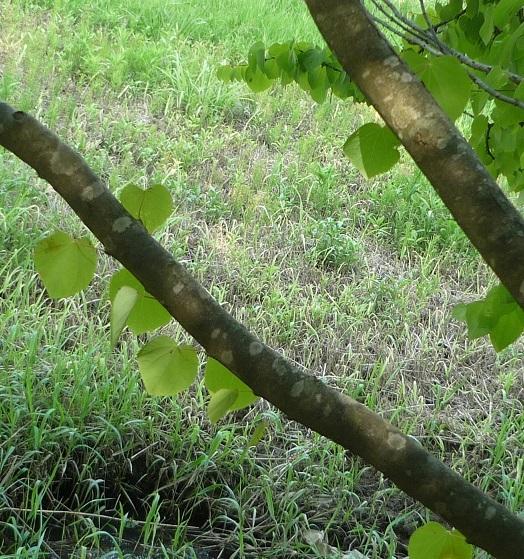 九谷焼美術館 樹木