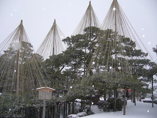 兼六園〜雪つり