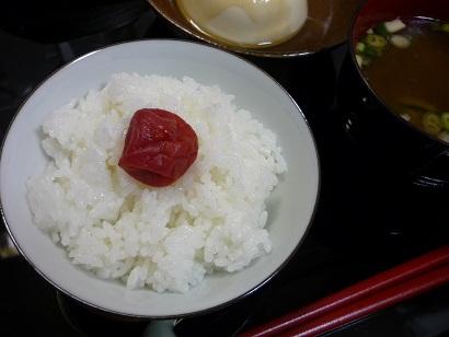 福井梅・ベニサシ1