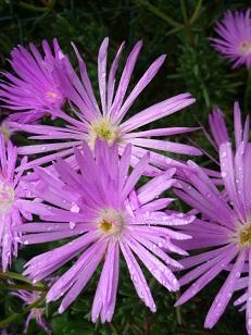 5.28 雨の中に咲く花