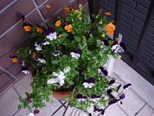 雨の中の植物2