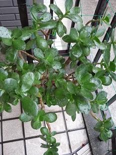 雨の中の植物1