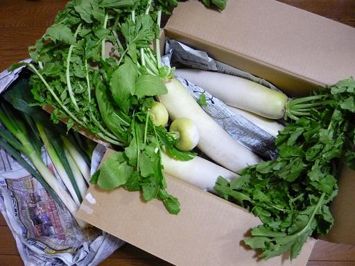姉貴野菜1