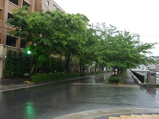 五月の雨の日1