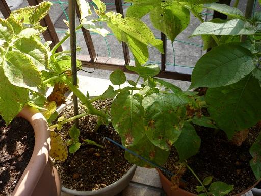 植物たち3