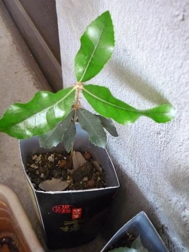 植物たち4