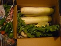 あねき野菜1