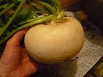 あねき野菜3