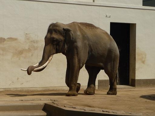王子動物園8