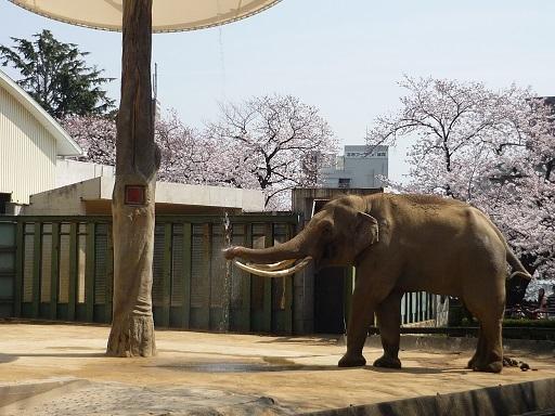 王子動物園9