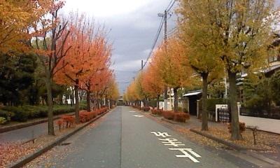 秋の並木1