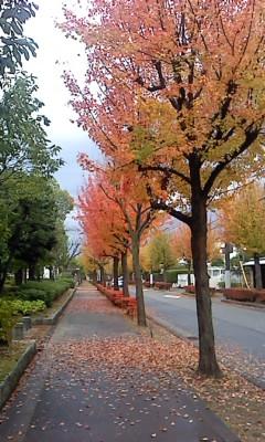 秋の並木2
